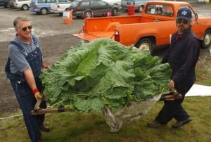 giantcabbage