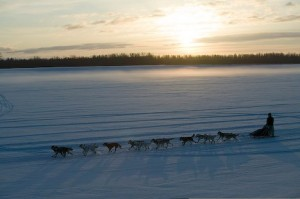 Sunrise over Iditarod Racer
