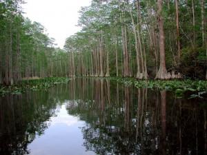 okefenokeeswamp