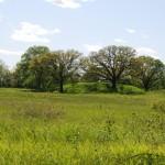Dickson-mound