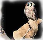 live_bird_at_milford_nature_center1_medium