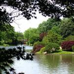 Missouri_Botanical_Garden_-_Seiwa-en